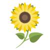 Registrovaný uživatel, který přispěl anonymně